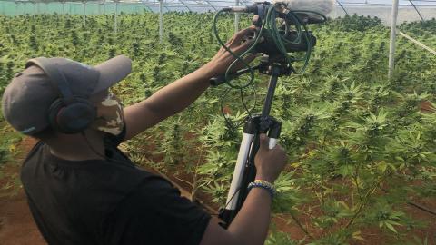 Cannabis TV filming set